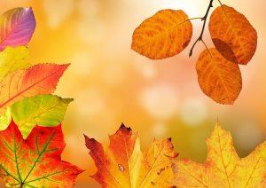 Herbstputzete der TG Bisingen